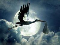Spon_stork