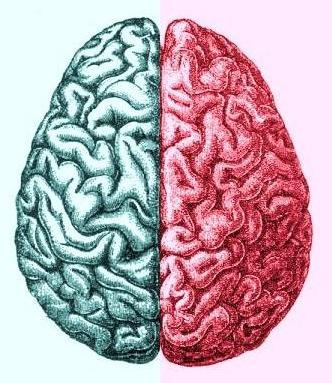 Red+blue+brain