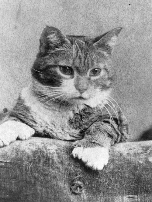 636053123563001025-Ithaca-Kitty