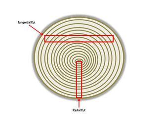 Diagram Tangential and Radial Cuts, 2015,Courtesy of The Strong, Rochester, New York - Copy