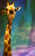 Oliver the giraffe, 2015, Courtesy of Victoria Gray