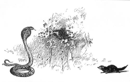 MongooseCobraKipling